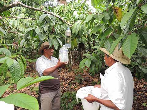 Combate de la Broca Mejorará Producción de Café