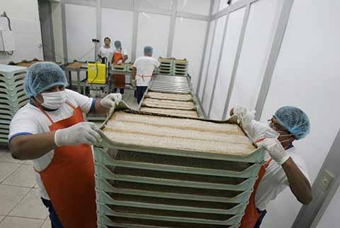 Barrera Biológica Para Combatir Plagas en el Mango Ataulfo