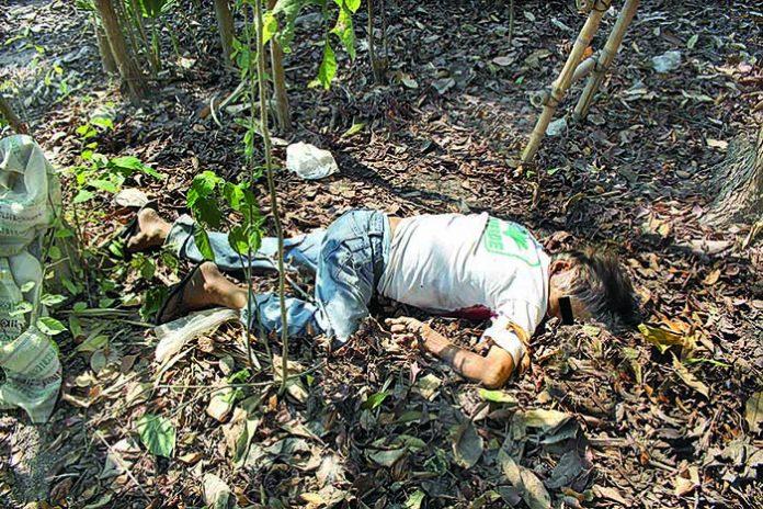 Abuelito Muere al Caer de un Árbol