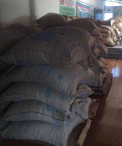 Productores del Soconusco Exportan Cacao a Europa