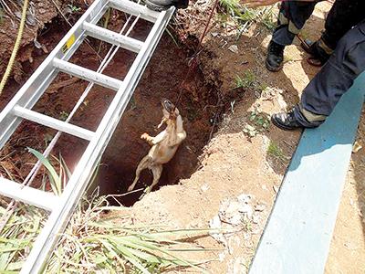 Rescatan dos Perros que Cayeron a un Pozo