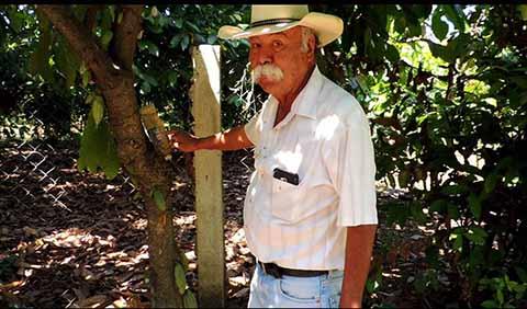 Utilizan Técnica Para Combatir Plagas del Cacao