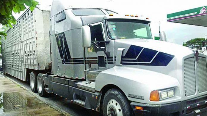 Aseguran Camión Cargado con Caballos