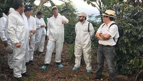 Expertos Comprueban Daños de Nueva Roya en Honduras