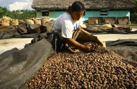 Productores Acceden a Créditos Para Fortalecer su Exportación