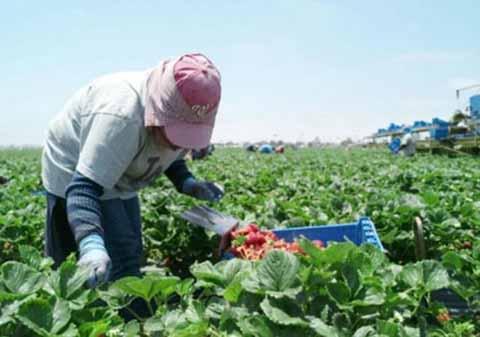 Requerirá EU a 4 Millones de Trabajadores Mexicanos Legales
