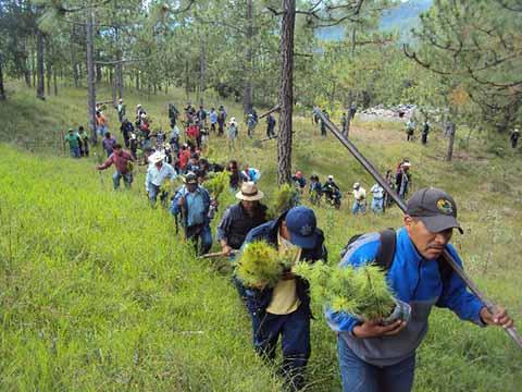 Urge Reforestar Nuestros Bosques y Selvas: Melgar