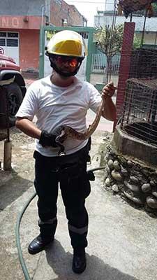 Bomberos Capturan Culebras Agresivas