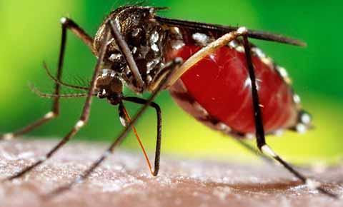 Investigan 11 Decesos por Probable Dengue en la Entidad