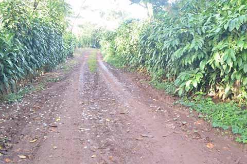 Tras 30 Años de Gestiones, Rehabilitarán Camino Saca Cosecha en la Zona Alta de Tapachula