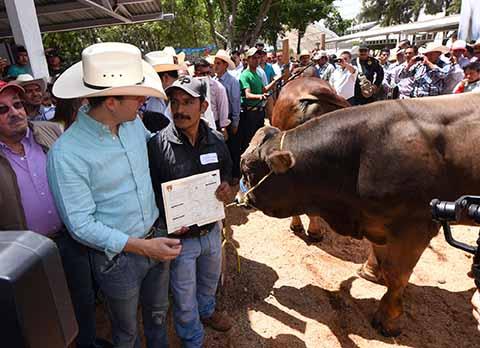 En el marco de la Expo Feria Internacional Comitán 2017, el Gobernador entregó 100 sementales bovinos de registro.
