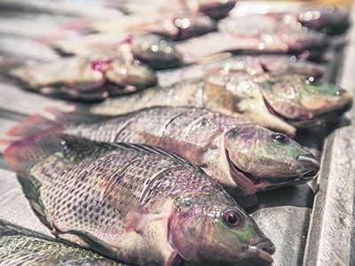 Persiste Abandonado en el Sector Pesquero