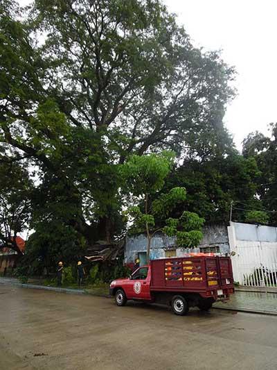 Árbol del Vecino le Dañó su Vivienda