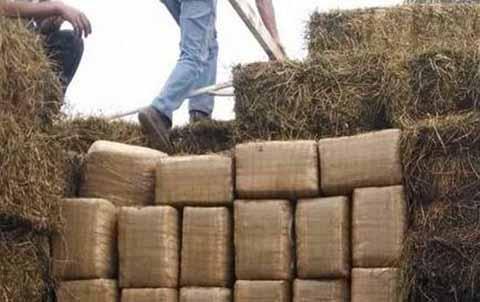 La droga procedente de Oaxaca, era transportaba en un camión de redilas oculta en pacas de alfalfa para ganado; se aseguraron 102 paquetes de marihuana, dando un pesos total de 591.97 kg, mientras que el chofer fue detenido junto con la unidad.
