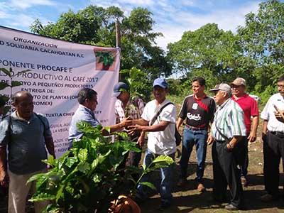 Campesinos Reciben Plantas de Café Resistentes a la Roya