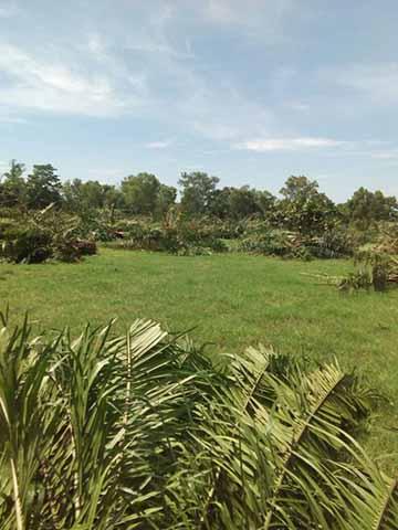 Productores de Palma Africana Inconformes por Falta de Molinos