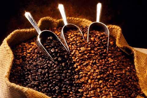 Aumenta Producción de Café Mexicano Pese a Plagas y la Falta de Apoyos