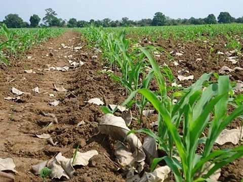 Cambio Climático Disminuirá la Producción Agrícola en 25%