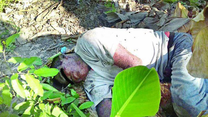 Jornalero Murió Atacado por Abejas