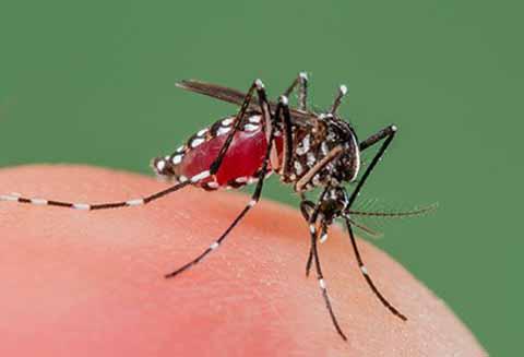 Chiapas Ocupa Primer Lugar en Decesos por Casos de Dengue