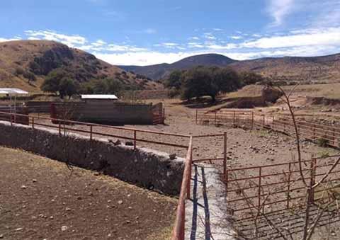 Los ranchos asegurados son El Rebaje, con superficie de más de 466 hectáreas; Mesa de Chávez, de 755 hectáreas; El Agostadero de Moreno # 2, con poco más de 572 hectáreas, y el Rancho de Enmedio que mide 551 hectáreas, en donde había 30 bisontes y 5 llamas.