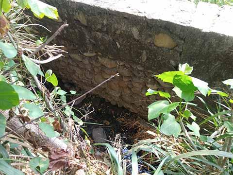 Alertan por Contaminación con Aguas Negras