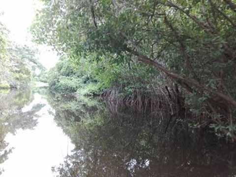 Sistemas Lagunarios en Chiapas en Riesgo por Deterioro Ambiental