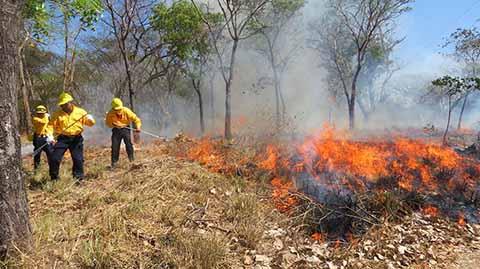 157 Incendios Arrasan más de Tres Mil Hectáreas en Chiapas