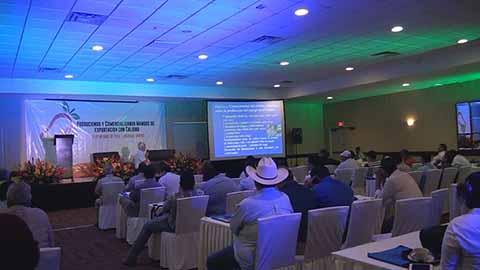 Productores de Mango Ataulfo Buscan Mejorar Canales de Comercialización