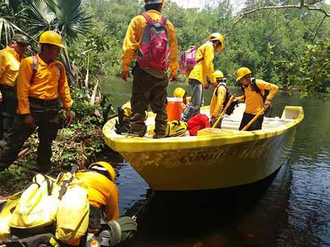 Se quemaron 400 hectáreas de tule en La Encrucijada