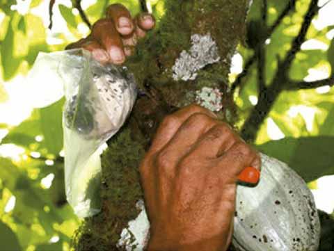 Campesinos Piden Apoyos Para Combatir Plagas
