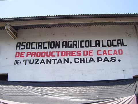 Cacaoteros de Tuzantán Seguirán Luchando por un Mejor Precio del Producto
