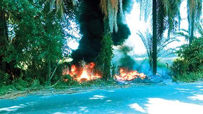 Incendio Consume Pastizal y Palmeras