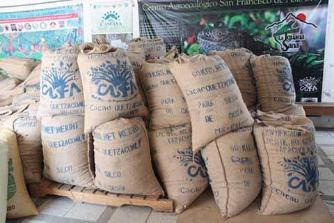 Cacao del Soconusco Será Exportado al Mercado Asiático