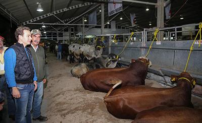 El mandatario estatal refrendó su compromiso de seguir brindando todo el respaldo a los ganaderos, a través de un trabajo conjunto con el sector productivo para hacer un campo más competitivo.