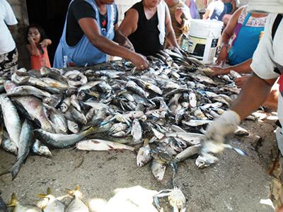 Se Desploma la Producción Pesquera y Camaronícola