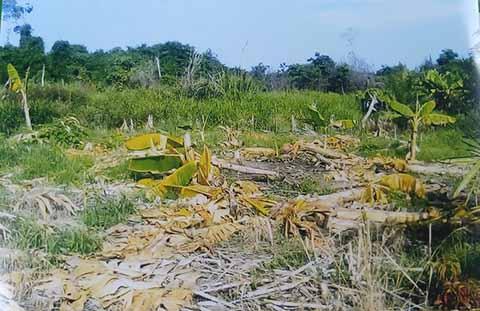 Campesinos Denuncian Despojo y Daños en Predio de Suchiate