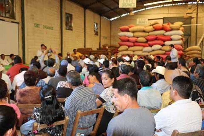 La Corrupción Gubernamental Hundió en Extrema Pobreza al Campo: Cafeticultores