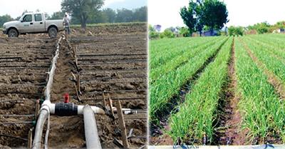 Falta de Permisos Para Sistemas de Riego Provoca Pérdidas en el Sector Agrícola