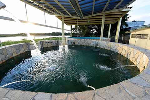 Con Centro de Investigación y Atención, Impulsa Velasco Protección del Manatí