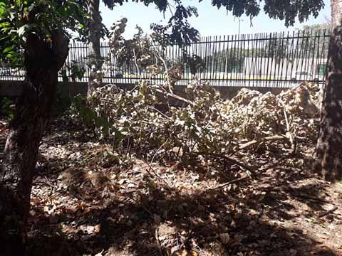 Sin Mantenimiento ni Vigilancia el Parque Ecológico de Tapachula