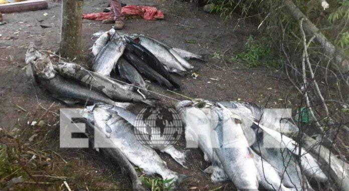 Activa CONAPESCA Línea Telefónica Directa Para Atención de Denuncias Sobre Pesca Furtiva